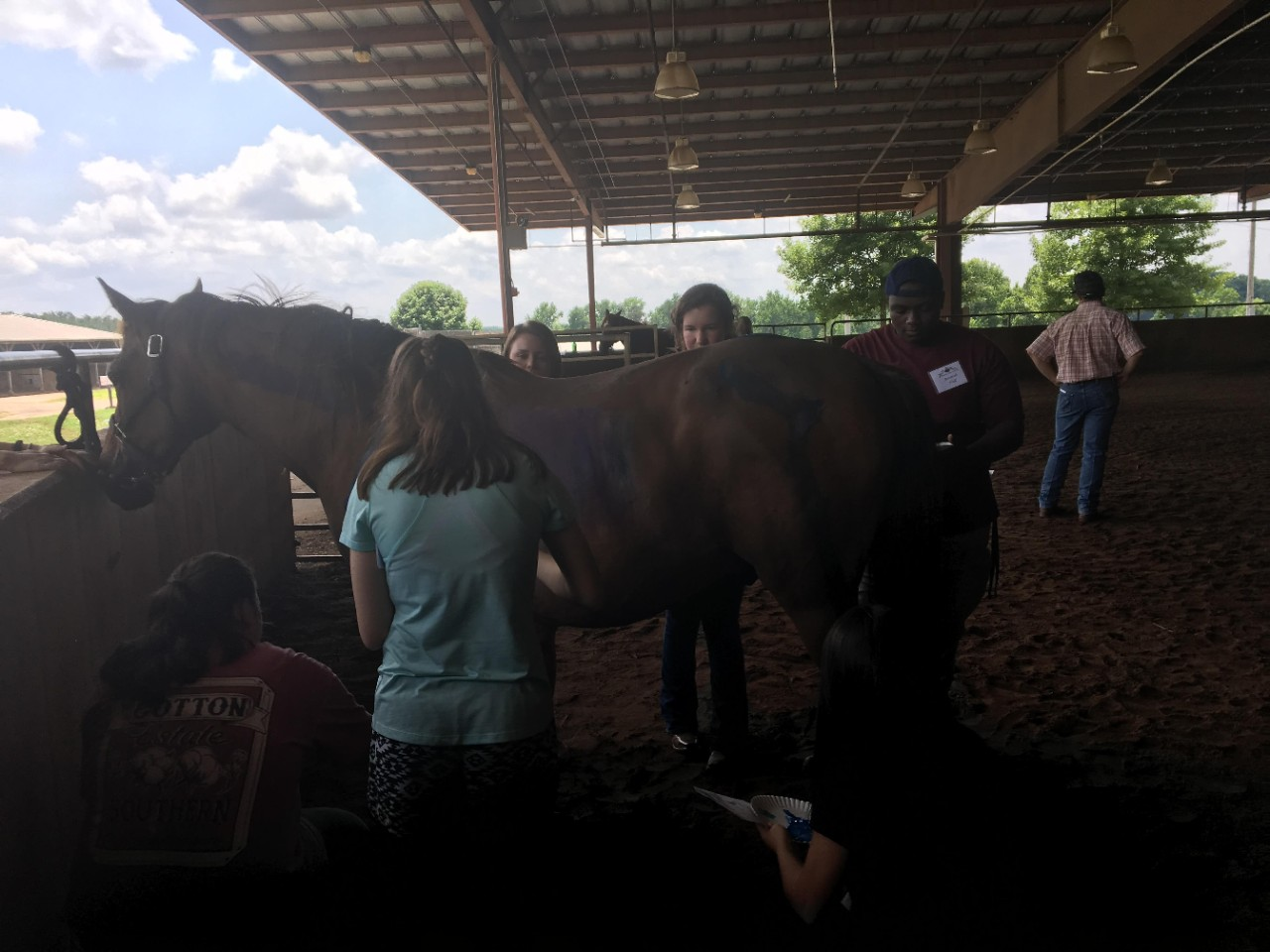 Animal Science in Action participants with horses