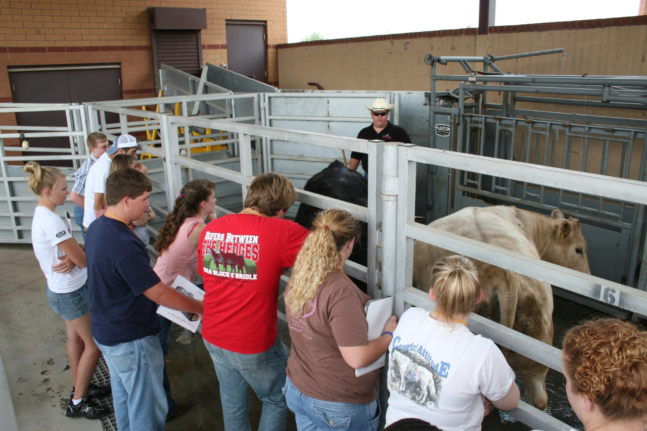 Animal Science in Action participants with cows